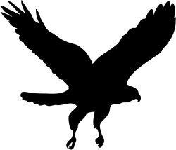 Accipiter Hawk Logo
